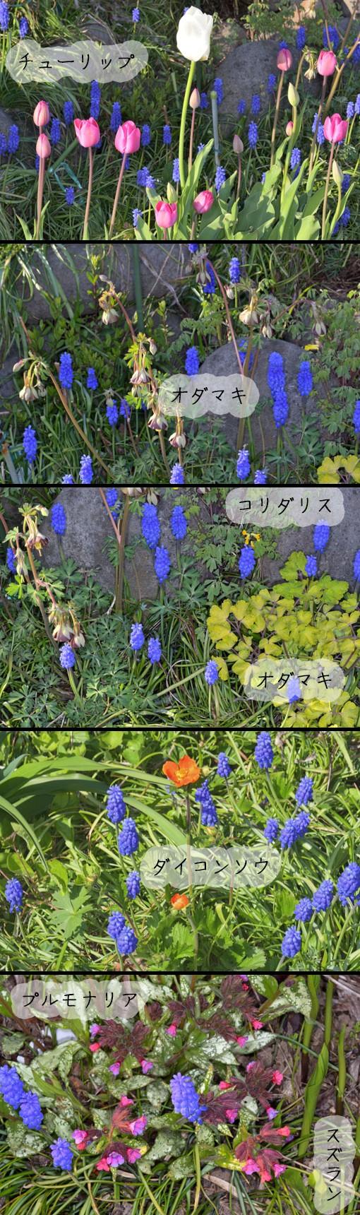 DSC_3079q90.jpg