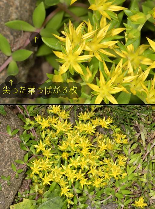 DSC_7721q90.jpg