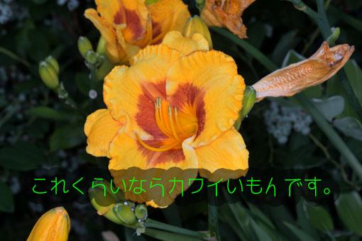 DSC_8707.jpg