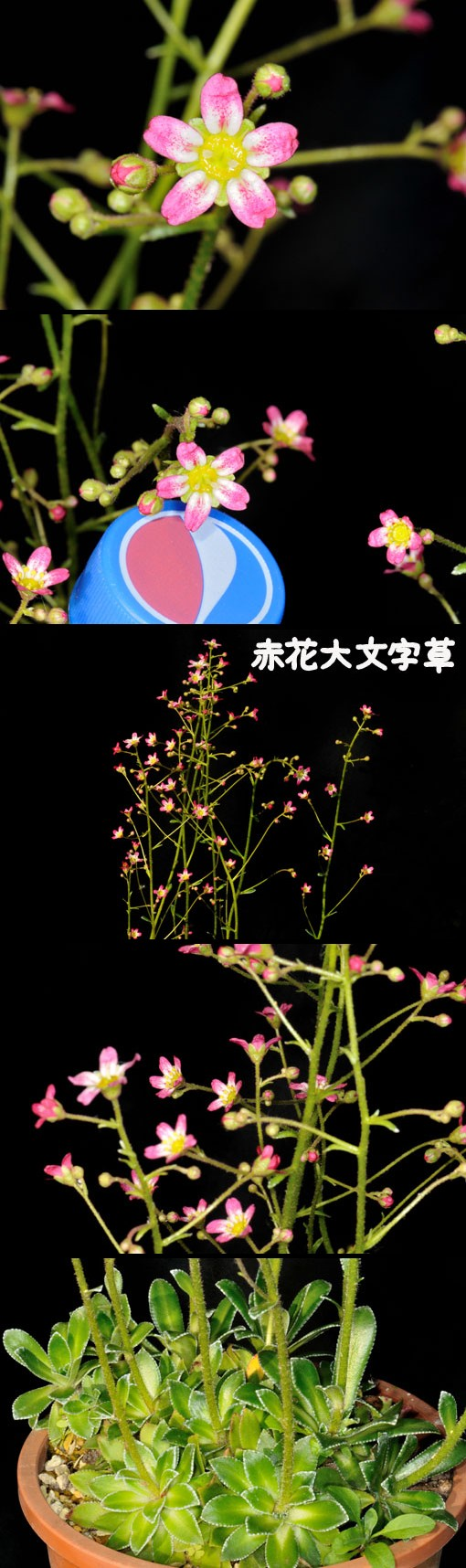 DSD_6166q90.jpg