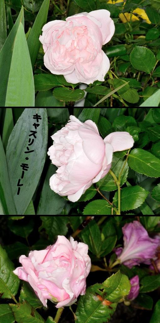 DSD_6414q90.jpg