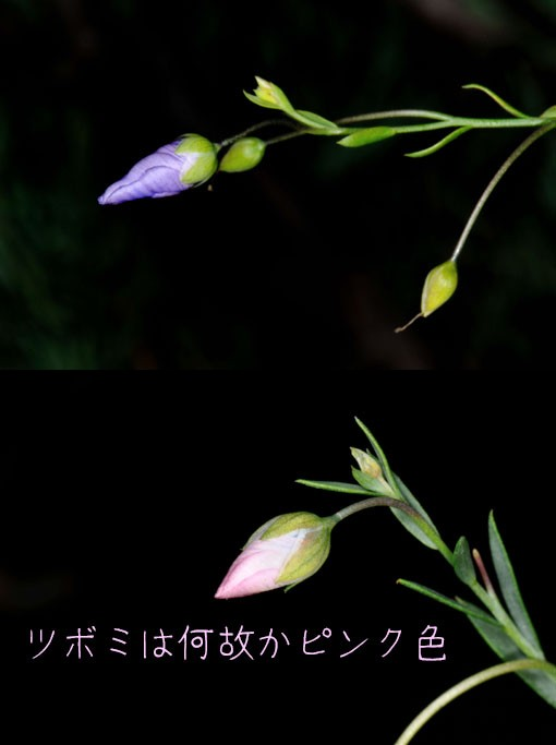 DSD_9734q90.jpg